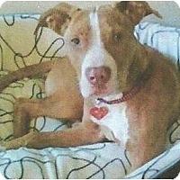 Adopt A Pet :: Rylie Mae - Seattle, WA