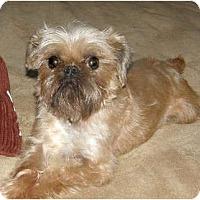 Adopt A Pet :: Sweet Thing - ADOPTION PENDING - Sun Prairie, WI