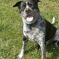 Adopt A Pet :: Miles - Covelo, CA