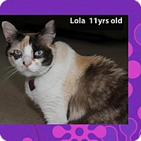 Domestic Shorthair Cat for adoption in Madison, Alabama - Lola*