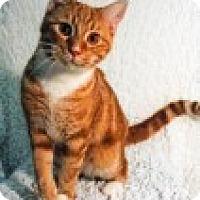 Adopt A Pet :: Finn - Delmont, PA