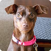 Adopt A Pet :: Derby - Sacramento, CA