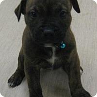 Adopt A Pet :: Rose - Gary, IN