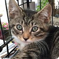 Adopt A Pet :: Monty - Brooklyn, NY