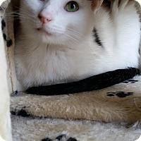 Adopt A Pet :: Duncan - Bartlett, TN