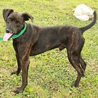 Hound (Unknown Type) Mix Dog for adoption in Washington, D.C. - Cliff