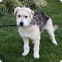 Adopt A Pet :: JUSTIN - Newport Beach, CA