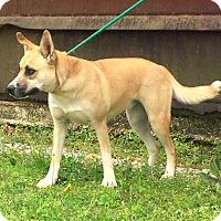 Adopt A Pet :: Dakota - Demopolis, AL