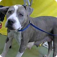 Adopt A Pet :: URGENT on 4/25 @DEVORE - San Bernardino, CA