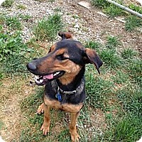 Adopt A Pet :: Lexi - Adopted!! - New Richmond, OH