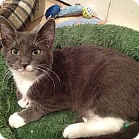 Adopt A Pet :: Angelo - East Hanover, NJ