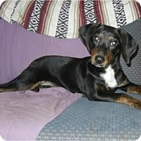 Adopt A Pet :: Katie  ADOPTED!! - Antioch, IL