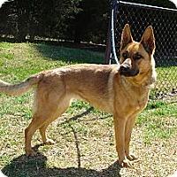 Adopt A Pet :: ZENA - ROCKMART, GA