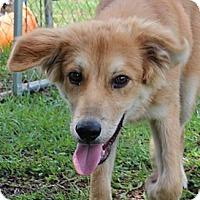 Adopt A Pet :: Quarter - Spring Valley, NY