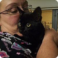 Adopt A Pet :: Puma - Walnut, IA