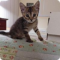 Adopt A Pet :: Joy - Lighthouse Point, FL