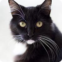 Adopt A Pet :: Leila - Chicago, IL