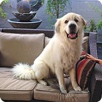 Adopt A Pet :: *URGENT* NANUK - Van Nuys, CA