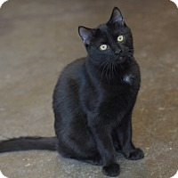 Adopt A Pet :: Pepperjack! - Brooklyn, NY