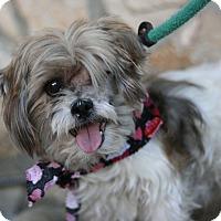 Adopt A Pet :: Shane - Canoga Park, CA