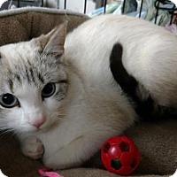 Adopt A Pet :: Skyla - Knoxville, TN