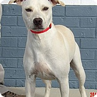 Adopt A Pet :: Snowbell (35 lb) Awesome Girl! - SUSSEX, NJ