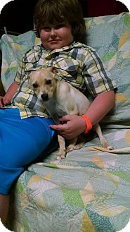 Chihuahua Mix Puppy for adoption in Haggerstown, Maryland - Mickey