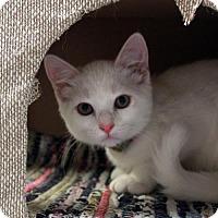 Adopt A Pet :: Peter - Waco, TX