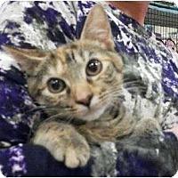 Adopt A Pet :: Sparky - Reston, VA
