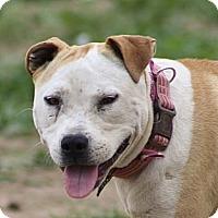 Adopt A Pet :: Bonnie. Family girl - Sacramento, CA