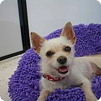 Adopt A Pet :: FINLEY - Mission Viejo, CA