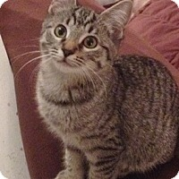 Adopt A Pet :: Culper - North Highlands, CA