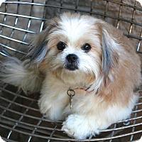 Adopt A Pet :: Suki  - pending adoption - Norwalk, CT
