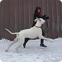 Adopt A Pet :: Vinnie - Stevens Point, WI