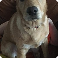 Adopt A Pet :: Isabell - Channahon, IL