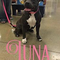 Adopt A Pet :: Luna - Cheney, KS