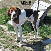 Adopt A Pet :: Lefou - Elizabeth City, NC