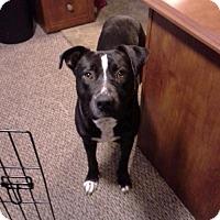 Adopt A Pet :: Ben - Corbin, KY