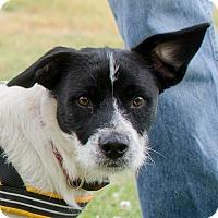 Adopt A Pet :: Jasper - Greenwood, SC