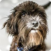 Adopt A Pet :: Pepper - St. Petersburg, FL