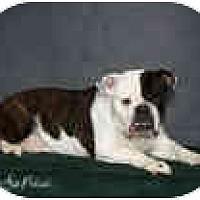 Adopt A Pet :: Sally - conyers, GA