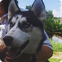 Adopt A Pet :: Blaze - Jacksonville, FL