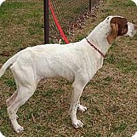 Adopt A Pet :: REBEL - ROCKMART, GA