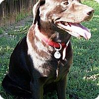 Adopt A Pet :: Yote - Gilbert, AZ