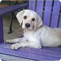 Adopt A Pet :: Kipper (pending adoption) - Adamsville, TN