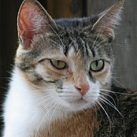 Adopt A Pet :: Meiko - North Fort Myers, FL