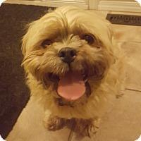 Adopt A Pet :: Baxter - Edmonton, AB