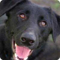 Adopt A Pet :: Jimmy - Walker, LA