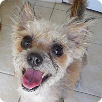Adopt A Pet :: Twinkle - Ormond Beach, FL