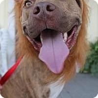 Adopt A Pet :: Murphy Roo***Tripod*** - New Smyrna Beach, FL